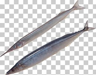 Pacific Saury Oily Fish Sauries Sardine PNG