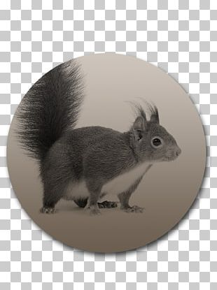 Domestic Rabbit Squirrel Whiskers Fur Snout PNG