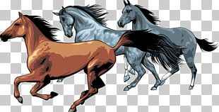 American Paint Horse Equestrian PNG