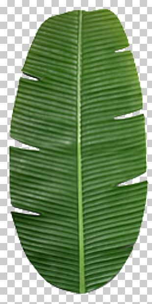 Banana Leaf Texture Mapping PNG
