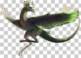 Beak Dragon Fauna Feather PNG