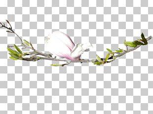 Flower Floral Design Bud Tree PNG