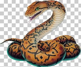 Snake Vipers Ball Python Drawing Sketch PNG