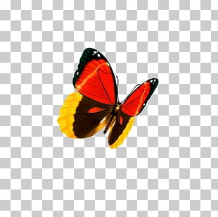 Butterfly Graphic Design Business Card PNG