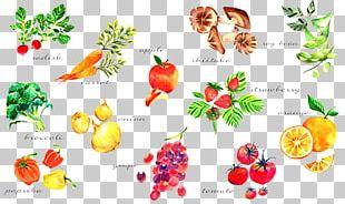 Vegetable Watercolor Painting Paper Vegetarian Cuisine PNG