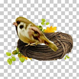 Basket Bird Edible Birds Nest Bird Nest PNG