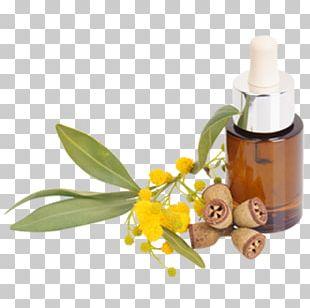 Tasmanian Blue Gum Eucalyptus Oil Lemon-scented Gum Essential Oil Eucalyptus Haemastoma PNG