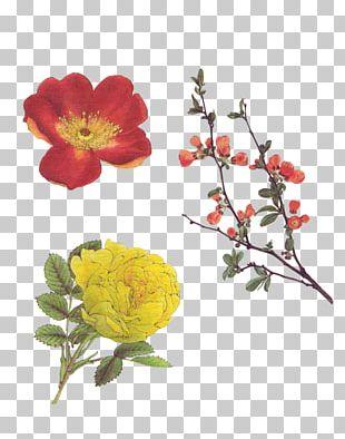 Garden Roses Art Floral Design PNG
