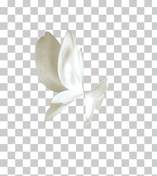 Butterfly White Gratis PNG
