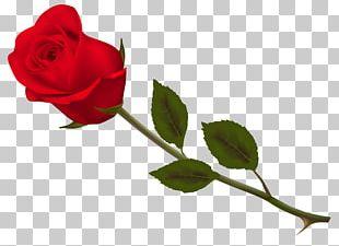Garden Roses Floribunda Centifolia Roses Paper Cut Flowers PNG