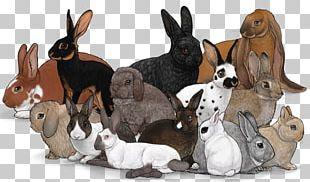 Domestic Rabbit Netherland Dwarf Rabbit Flemish Giant Rabbit Rex Rabbit Belgian Hare PNG