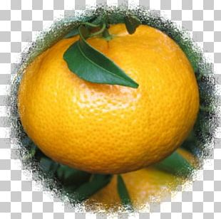 Clementine Lemon Bitter Orange Tangerine Mandarin Orange PNG