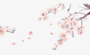 Hand-painted Cherry Blossom Flower-free Material PNG