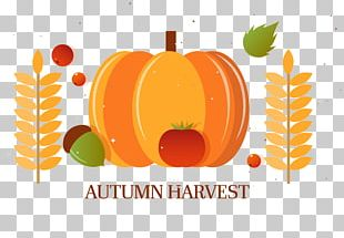 Pumpkin Autumn Harvest PNG
