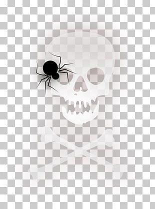 Spider Halloween PNG