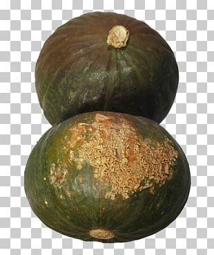 Cucurbita Watermelon Gourd Winter Squash PNG