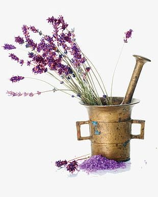 Lavender Flower Material PNG