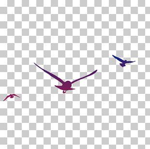 Bird Gulls PNG