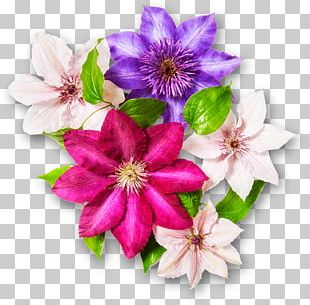 Cut Flowers Floral Design Garden Clematis Viticella PNG