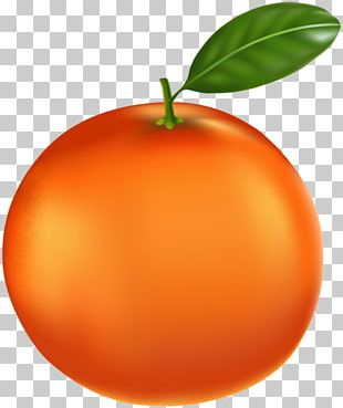 Tangerine Mandarin Orange Tangelo Clementine Bitter Orange PNG