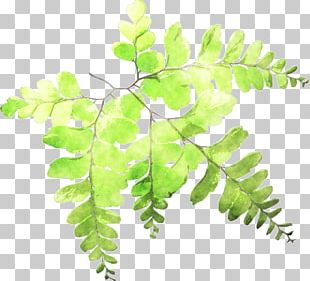 Fern Leaf Plant Stem Watercolor Painting PNG