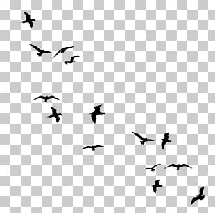 Drawing Birds Flock PNG