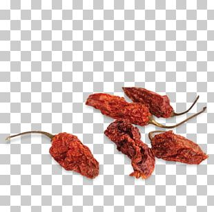 Chili Pepper Chili Con Carne Habanero Trinidad Moruga Scorpion Bell Pepper PNG