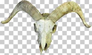 Goat Cattle Skull Horn Bone PNG