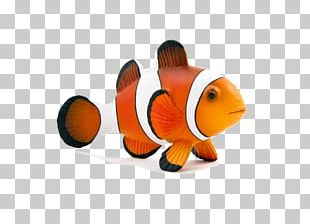 Clydesdale Horse Ocellaris Clownfish Toy PNG
