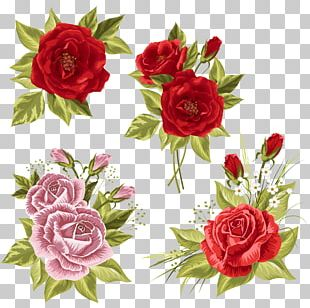 Garden Roses Wedding Invitation Centifolia Roses Beach Rose PNG