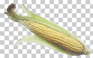 Corn On The Cob Maize Corncob Portable Network Graphics Sweet Corn PNG