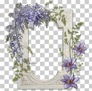 Frames Floral Design Cut Flowers PNG