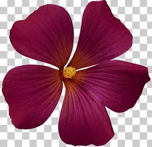 Magenta Flower Yellow Petal Violet PNG
