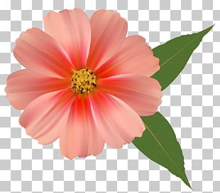 Flower Bouquet Orange Blossom PNG