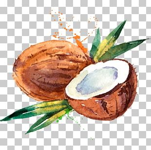 Coconut Water Coconut Milk Watercolor Painting PNG