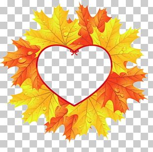 Autumn Leaf Color Heart Maple Leaf PNG