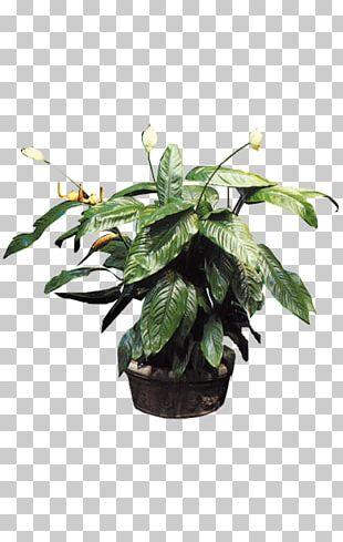 Plant Bonsai Flowerpot Tree PNG