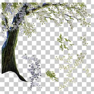 Tree Cherry Blossom Branch Flower PNG