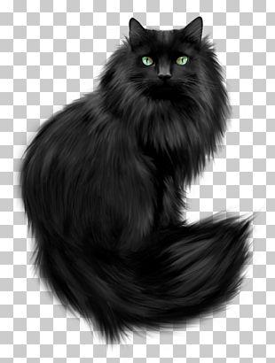 Kitten Cat Dog Puppy PNG