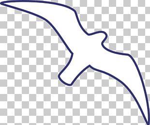 Gulls Line Art Drawing Bird PNG