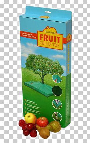 Fruit Tree Apple Plum Cherry PNG