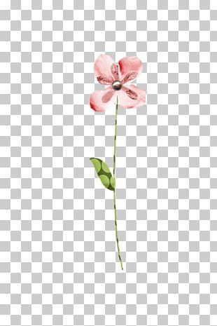 Moth Orchids Cut Flowers Pink M Plant Stem Bud PNG