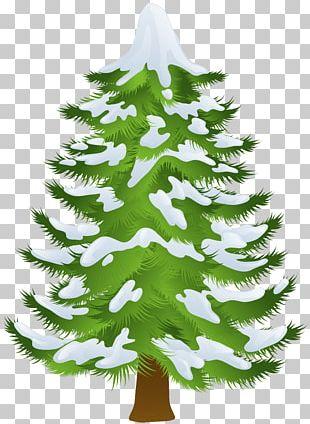 Pine Tree Winter PNG