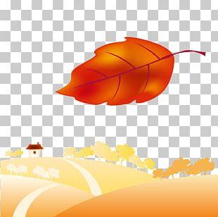 Autumn Maple Leaf PNG