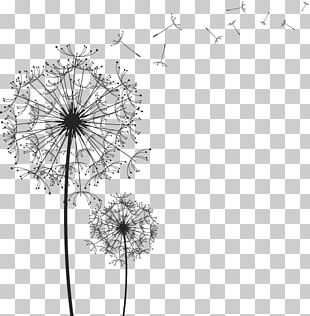 Black And White Line Drawing Dandelion PNG