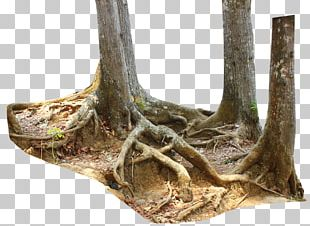 Trunk Driftwood Tree Stump Root PNG