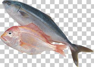 Sardine Fish Products Forage Fish PNG