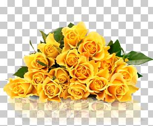 Garden Roses Yellow Stock Photography PNG