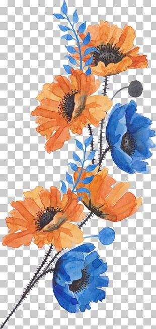 Common Poppy Flower PNG