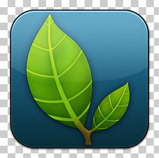Plant Tennis Ball Leaf Football PNG